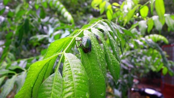 Aerosol: uso agrícola auxilia no combate à pragas e doenças