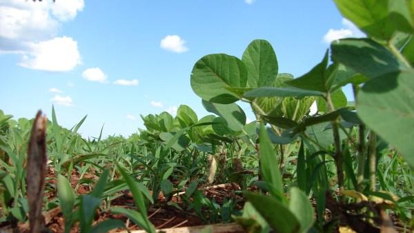 Agricultura familiar está associada ao consumo próprio e comercialização