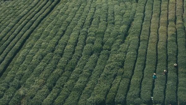 Agroquímicos e os seus impactos na agropecuária