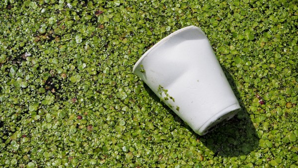Material biodegradável contribui para a redução dos impactos ambientais