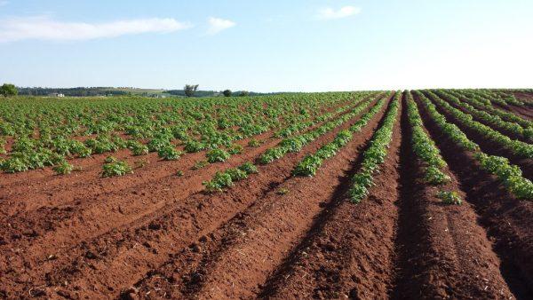 Calcário dolomítico melhora a produção e traz benefícios para o solo