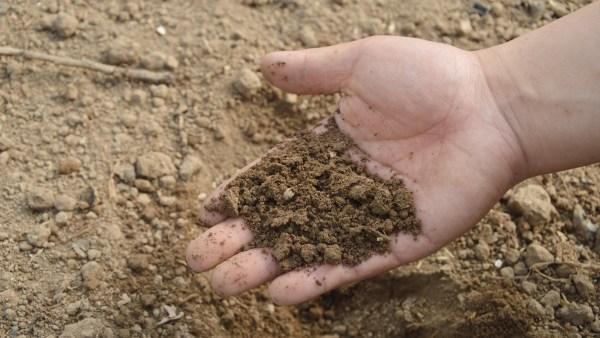 Composto garante o crescimento saudável das plantações