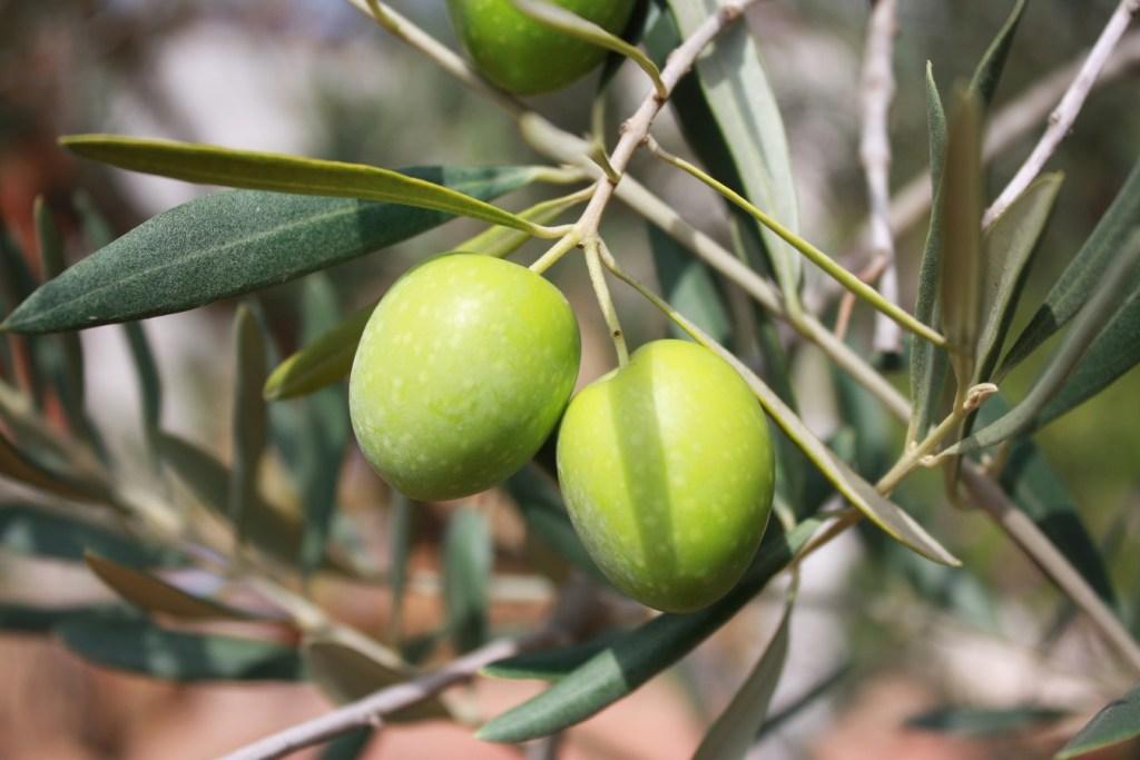 Cultivar: cultivo de frutas