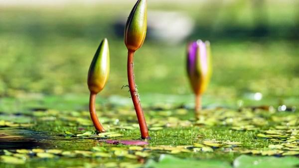 Rebento: conheça mais sobre este estágio das plantas