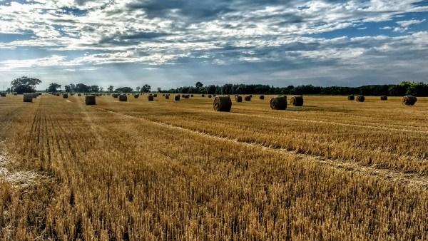 Rotação de culturas é benéfica e sustentável para sistemas agrícolas