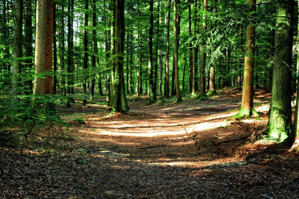 Silvicultura: florestas