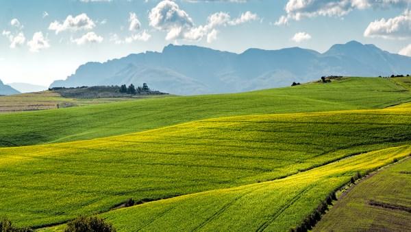 Arrendamento de terras é opção viável para a agropecuária do país