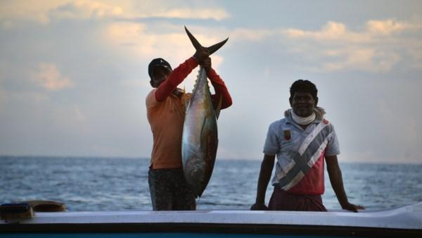 Atum é um dos peixes mais conhecidos e consumidos no Brasil