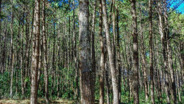 Celulose traz vantagens em produções e consumo do mundo agropecuário