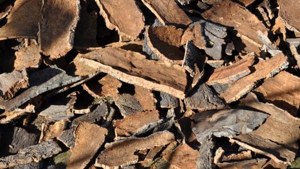 A cortiça é produto da árvore do sobreiro e seu mercado produtor é amplo