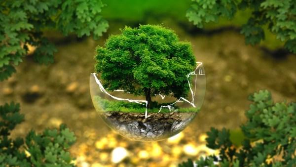 Educação Ambiental e a melhoria das condições ambientais no futuro