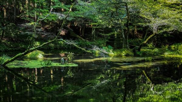 Legislação ambiental busca o respeito e a preservação da natureza