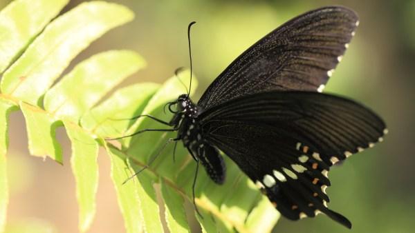 Taxonomia é a ciência que determina as diferentes espécies de seres vivos