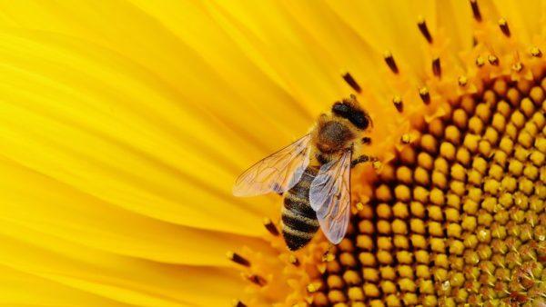 Fecundação e sua importância no desenvolvimento dos seres vivos
