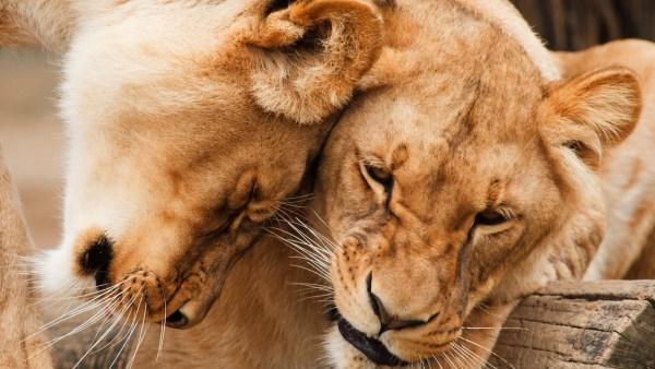 Feromônio e a sua poderosa atuação nas relações das espécies