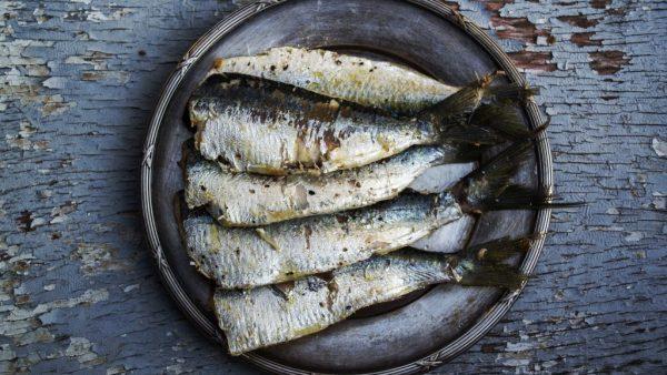 Piratinga é uma das maiores espécies de peixe do mundo