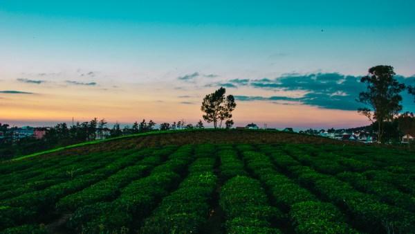 Agronegócio e a sua influência na economia nacional