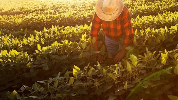 Funrural é um imposto obrigatório no agronegócio brasileiro