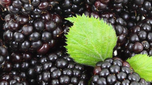 Amora preta pode ser consumida in-natura ou em doces