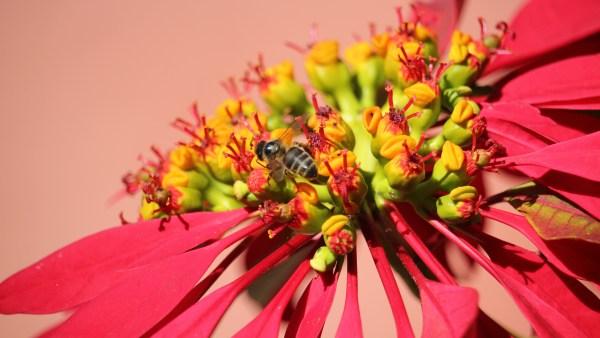 Biodiversidade significa riqueza e variedade na natureza