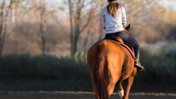 Sela é estrutura indispensável para animais de montaria