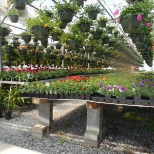 Viveiro de mudas é estrutura para o cultivo de plantas jovens