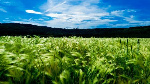 Fitotecnia é ciência que estuda o desenvolvimento dos vegetais