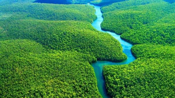 Floresta Amazônica representa 40% do território brasileiro