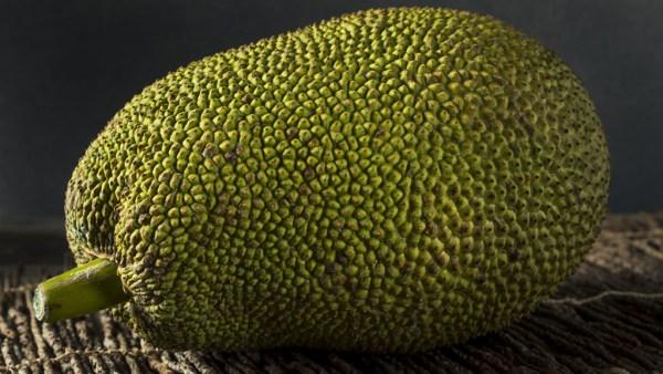 Jaca é abundante no Brasil e traz uma série de benefícios