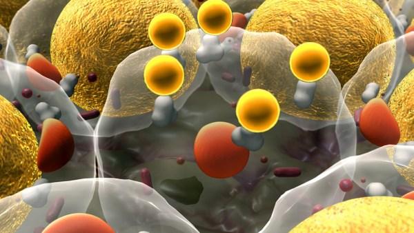 Os lipídios constituem uns dos principais componentes dos seres vivos