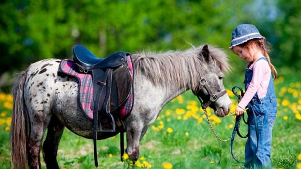 Pônei é menor que um cavalo e tem cauda e crina mais densas