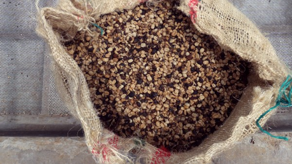 Vigiagro é um órgão que fiscaliza o comércio internacional agropecuário