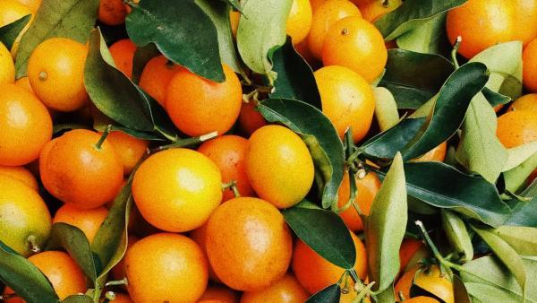 Citrosuco é uma das maiores produtoras de suco de laranja do mundo