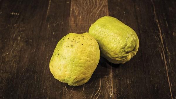 Cidra é uma fruta cítrica nativa do sudeste da Ásia e da Índia