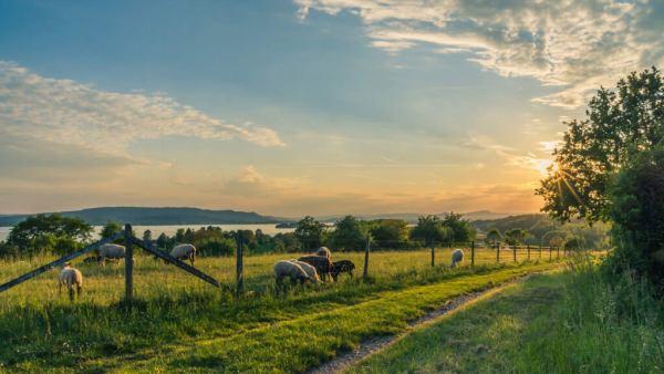 Fazenda é toda grande propriedade rural de lavoura ou criação de gado