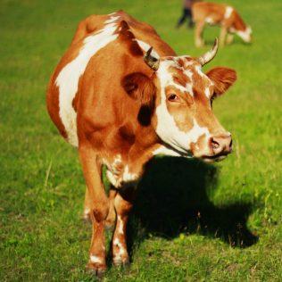 Medicamento similar é usado para tratamento de doenças em animais