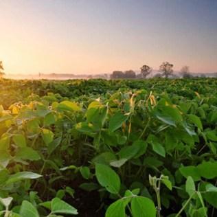 Notícias agrícolas são importantes para todos envolvidos no agronegócio