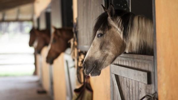 Baia é o local que abriga animais, principalmente em fazendas e campos