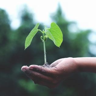 Muvuca é nova técnica econômica de plantio com foco no reflorestamento