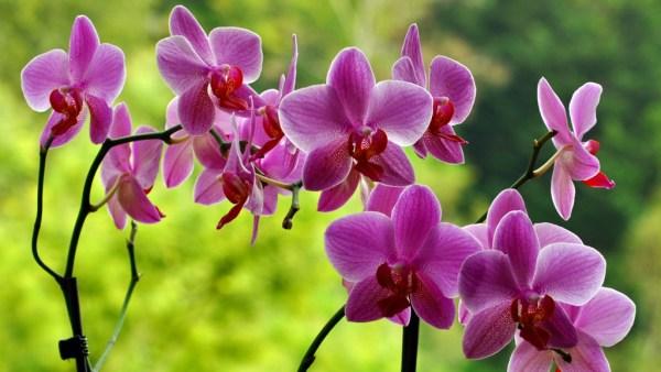 Orquídeas são muito famosas e amplamente cultivadas no Brasil