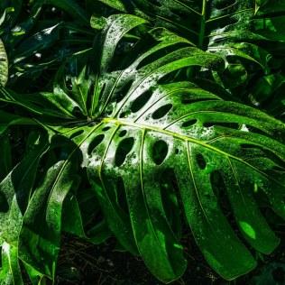 Plantas trazem vida aos ambientes e são cultivadas no mundo todo