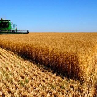 Safras são os períodos entre o preparo do solo e a colheita de uma cultura