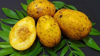 Umbu cajá é uma fruta tipicamente brasileira, comum na região Nordeste