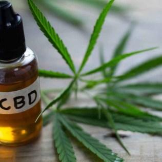 Canabidiol é uma das substâncias encontradas na Cannabis sativa