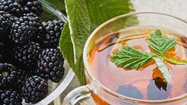 Chá de amora possui propriedades antioxidantes e é delicioso
