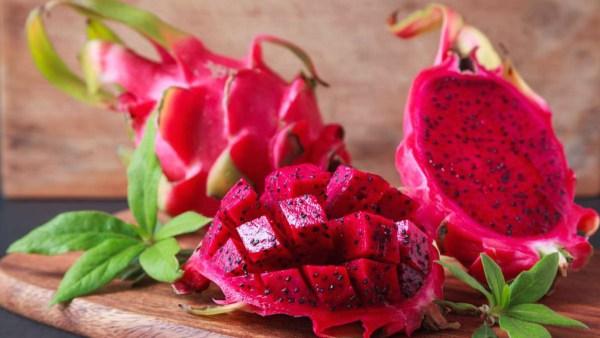 Entenda como plantar pitaya e obter uma boa produtividade