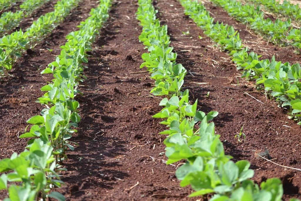 BrasilAgro atua com terras agricultáveis