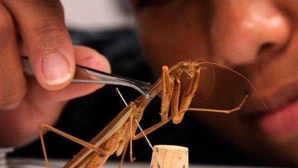 Entomologia é o ramo da Zoologia responsável pelo estudo dos insetos