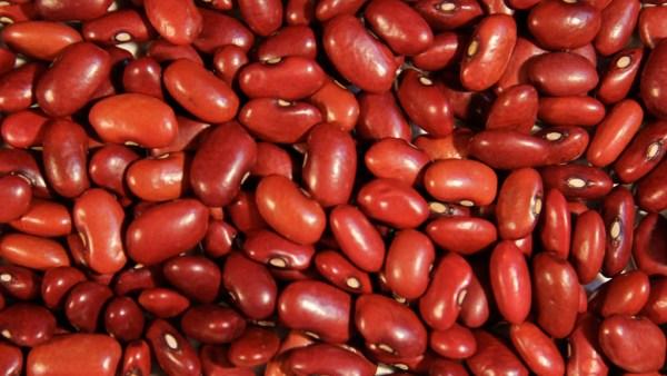 Feijão vermelho pode ser cultivado em todos os cantos do país