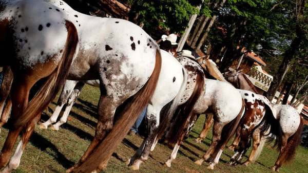 Expobauru ocorre no interior de São Paulo e tem shows gratuitos
